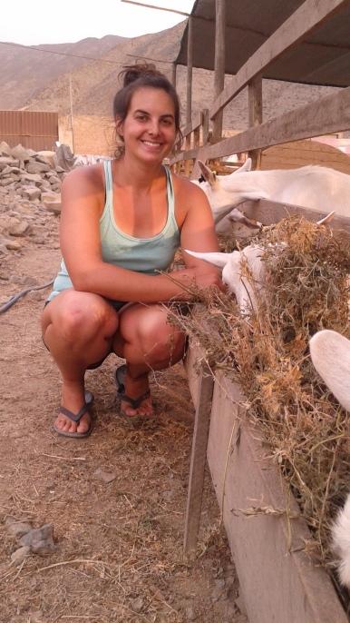 me crouching near a goat. i do my farming in flipflops.