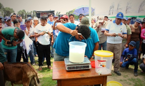 weighing the milk